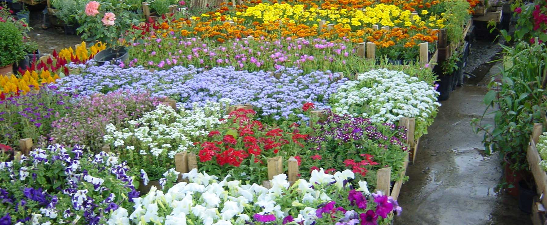 Garden center milano vivai progetto verde for Progetto verde